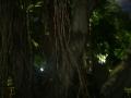 32_Dschungel