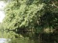 Amazonas Brandenburgs