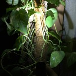 Pflanze im weißen Licht